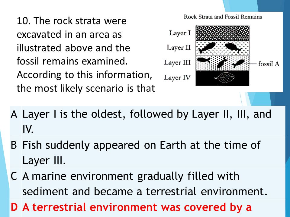 10. The rock strata were excavated in an area as illustrated above and the fossil remains examined. According to this information, the most likely scenario is that