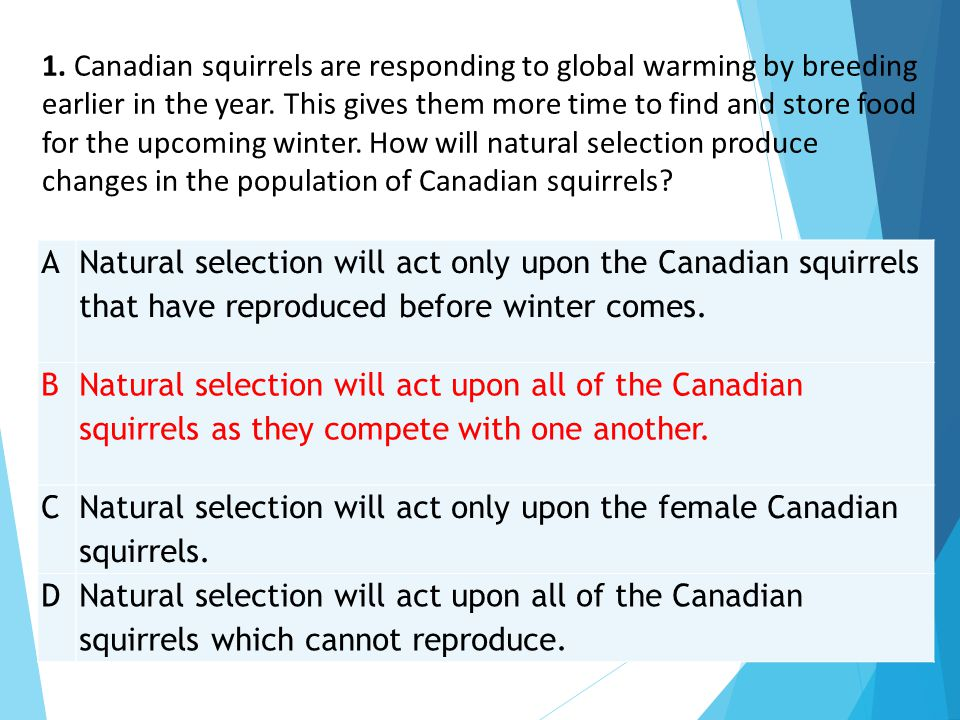 1. Canadian squirrels are responding to global warming by breeding earlier in the year. This gives them more time to find and store food for the upcoming winter. How will natural selection produce changes in the population of Canadian squirrels