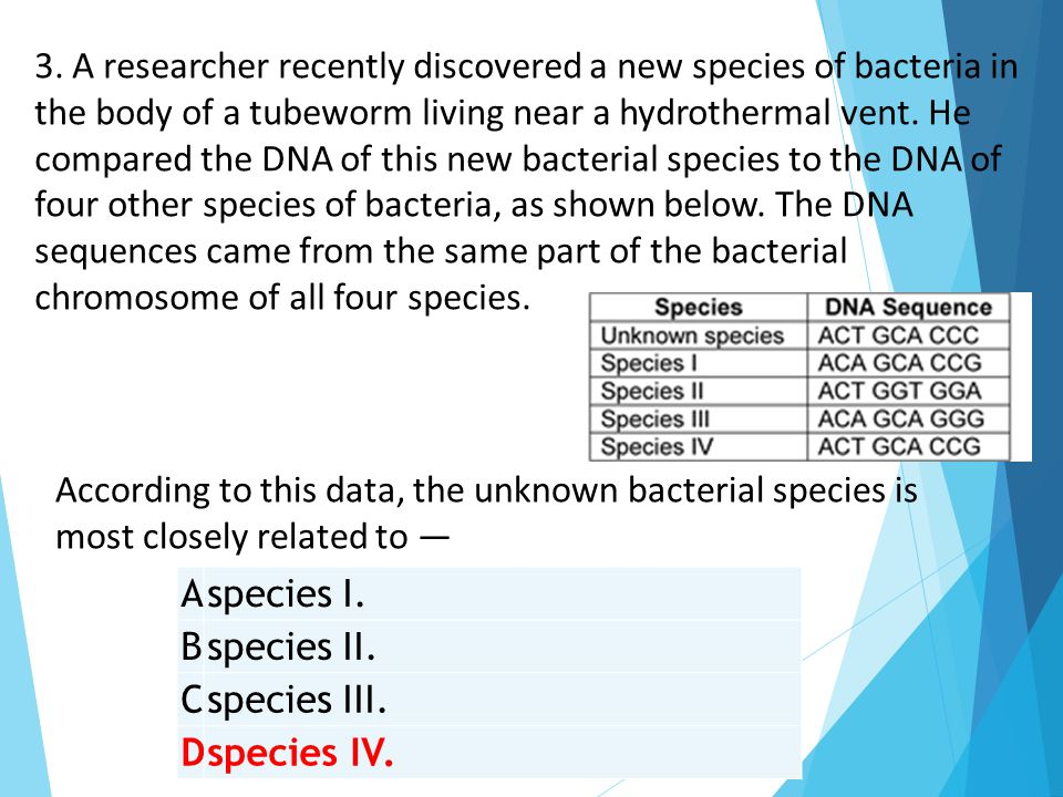 3. A researcher recently discovered a new species of bacteria in the body of a tubeworm living near a hydrothermal vent. He compared the DNA of this new bacterial species to the DNA of four other species of bacteria, as shown below. The DNA sequences came from the same part of the bacterial chromosome of all four species.