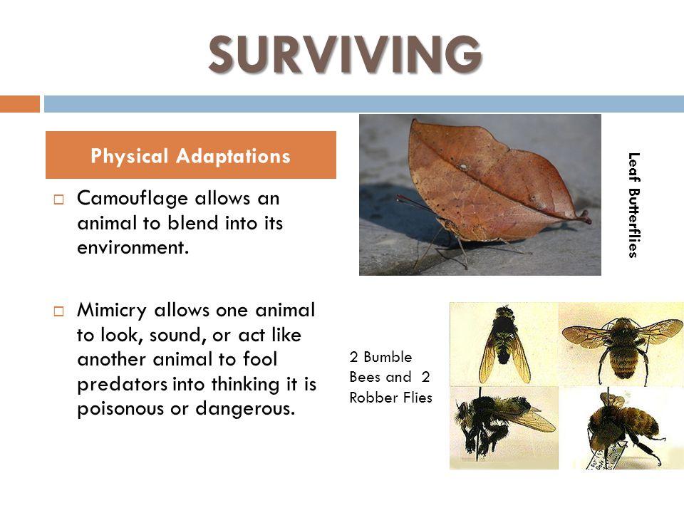 SURVIVING Physical Adaptations