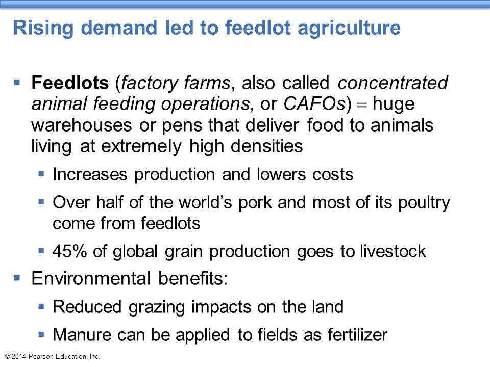 Rising demand led to feedlot agriculture
