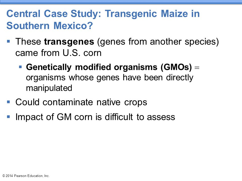 Central Case Study: Transgenic Maize in Southern Mexico