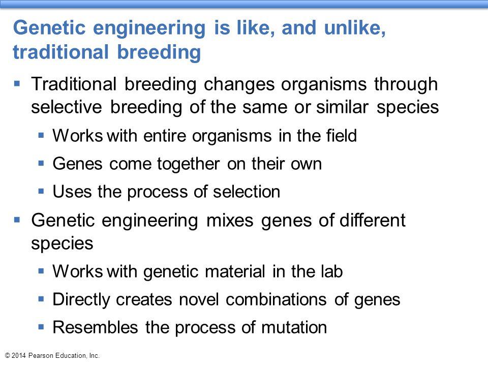Genetic engineering is like, and unlike, traditional breeding