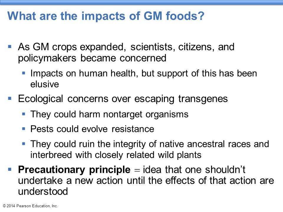 What are the impacts of GM foods