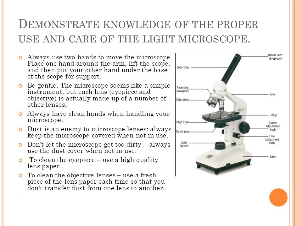 Demonstrate knowledge of the proper use and care of the light microscope.