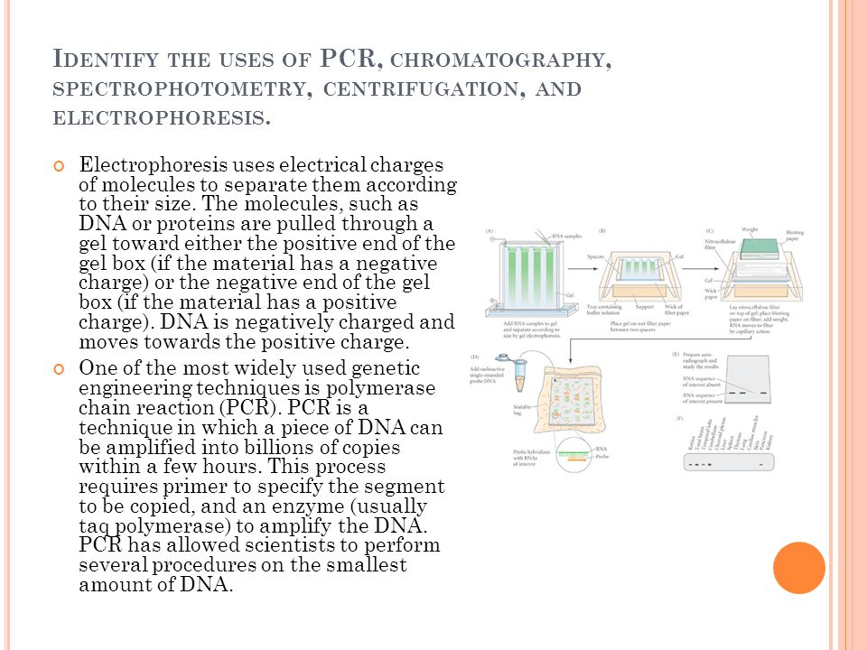 Identify the uses of PCR, chromatography, spectrophotometry, centrifugation, and electrophoresis.