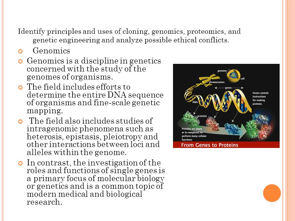 Identify principles and uses of cloning, genomics, proteomics, and genetic engineering and analyze possible ethical conflicts.