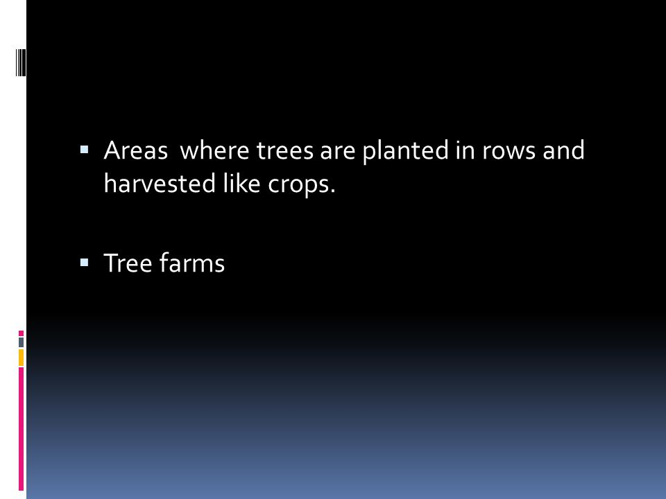 Areas where trees are planted in rows and harvested like crops.