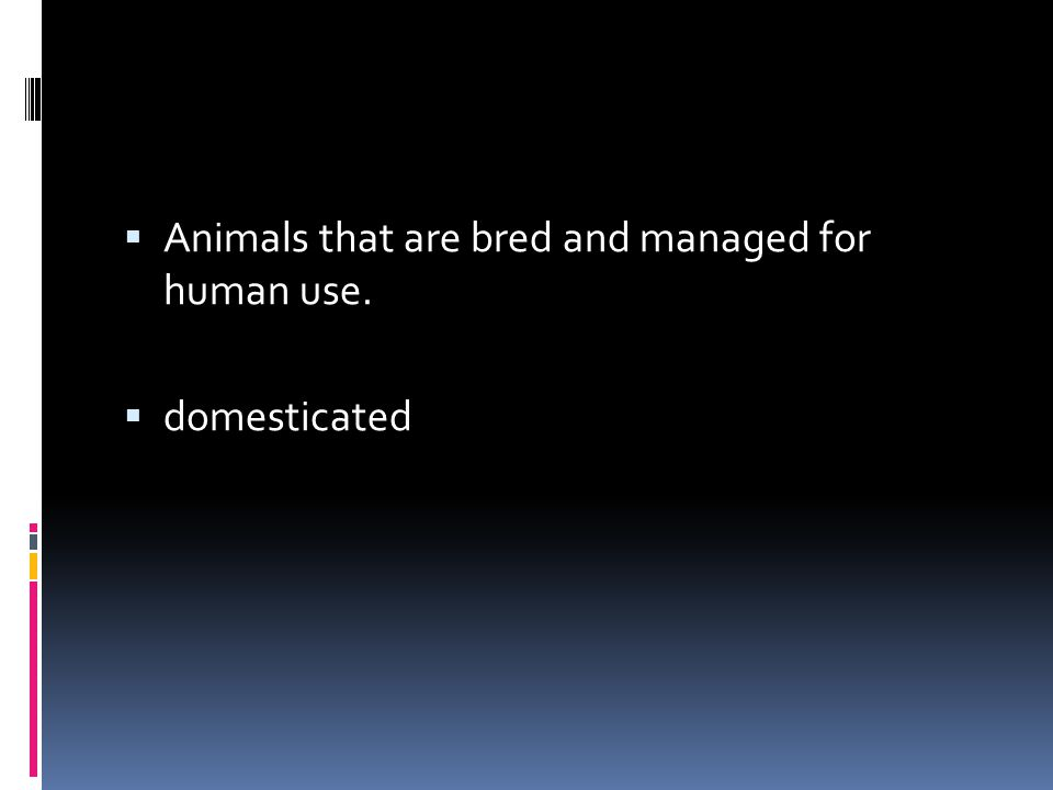 Animals that are bred and managed for human use.