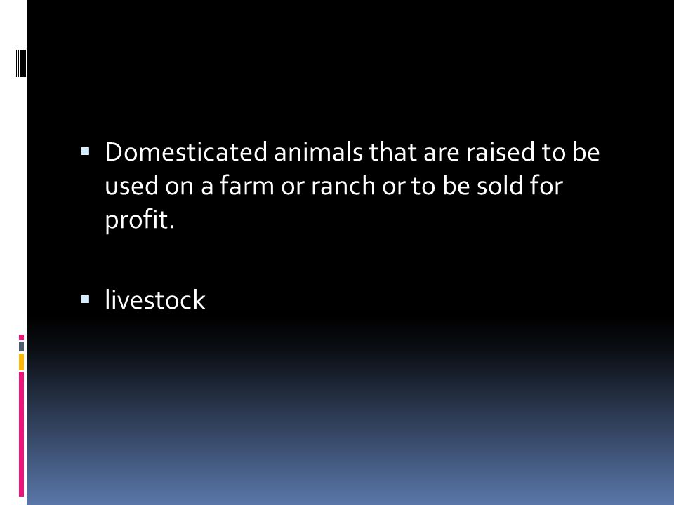 Domesticated animals that are raised to be used on a farm or ranch or to be sold for profit.