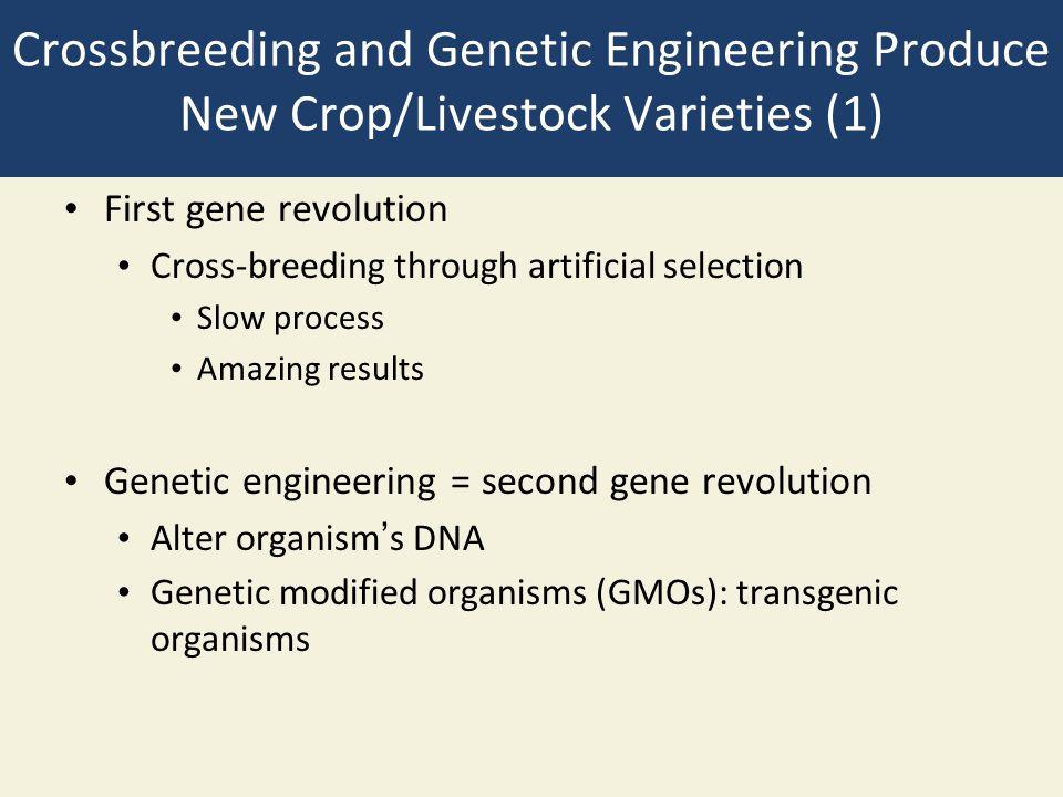 Crossbreeding and Genetic Engineering Produce New Crop/Livestock Varieties (1)