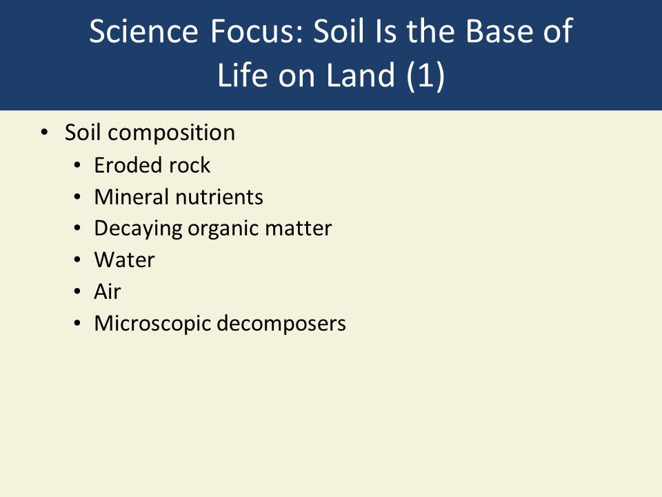Science Focus: Soil Is the Base of Life on Land (1)