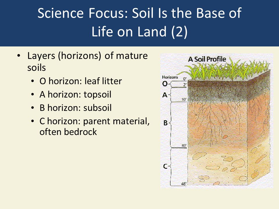 Science Focus: Soil Is the Base of Life on Land (2)