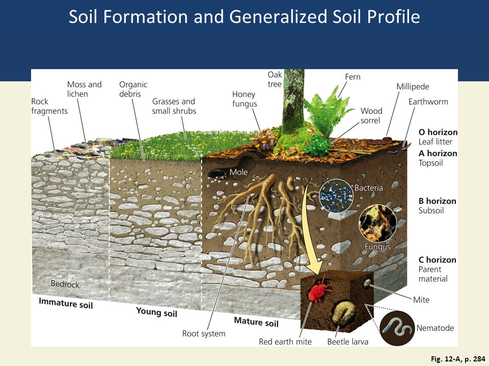 Chapter 12 food soil and pest management ppt download for Soil formation