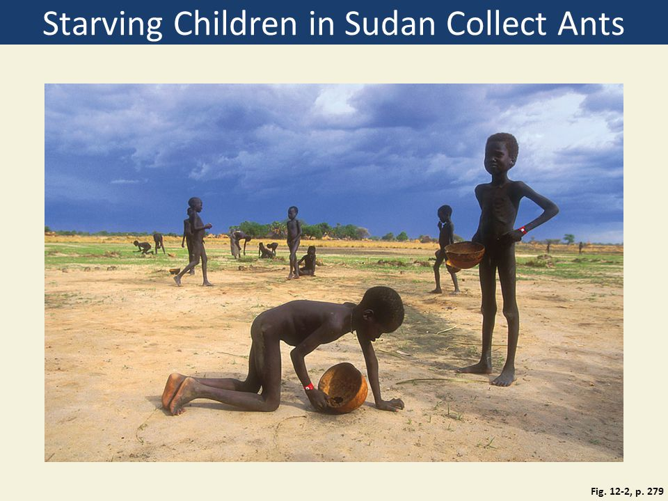 Starving Children in Sudan Collect Ants
