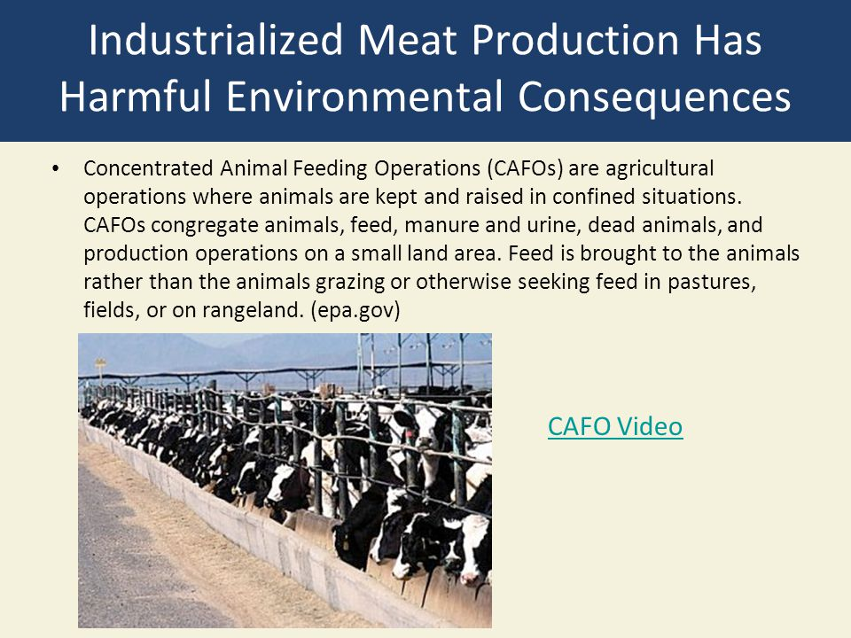 Industrialized Meat Production Has Harmful Environmental Consequences