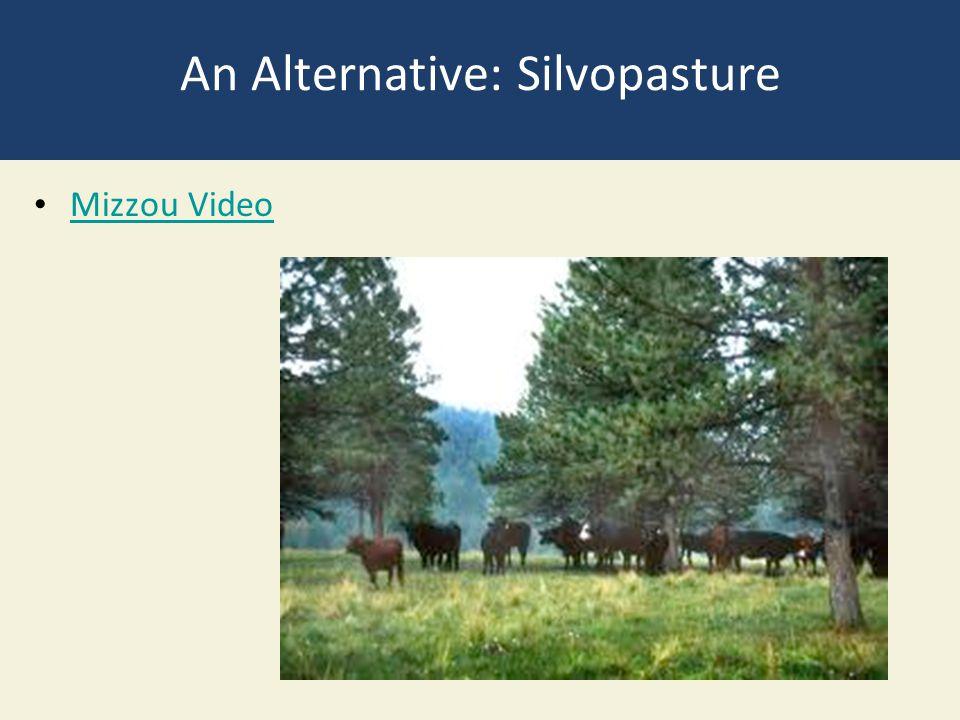 An Alternative: Silvopasture