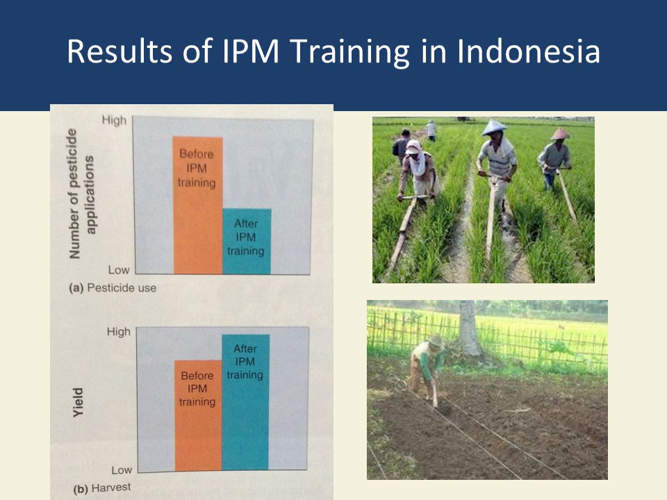 Results of IPM Training in Indonesia