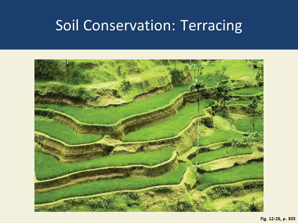 Soil Conservation: Terracing