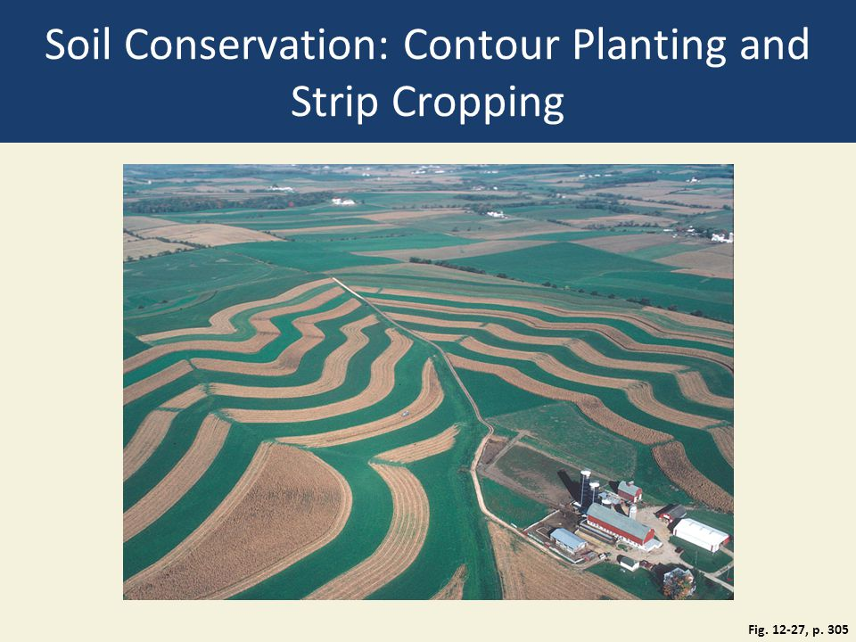 Soil Conservation: Contour Planting and Strip Cropping