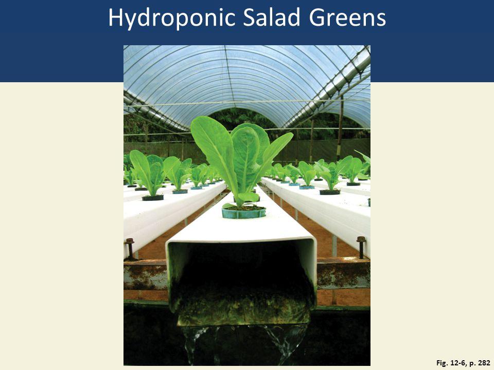 Hydroponic Salad Greens