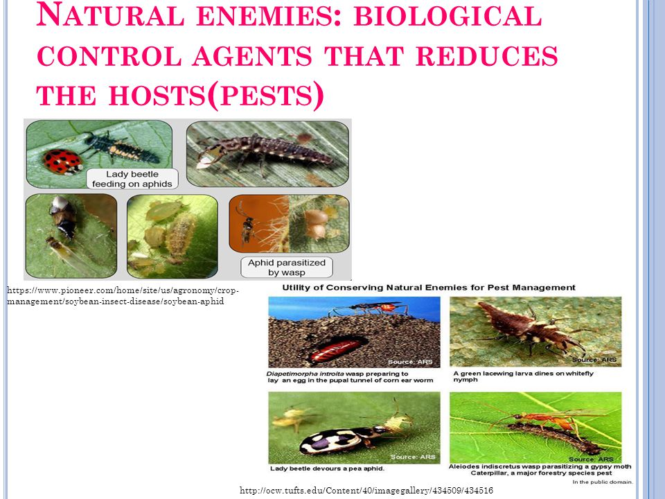 Natural enemies: biological control agents that reduces the hosts(pests)