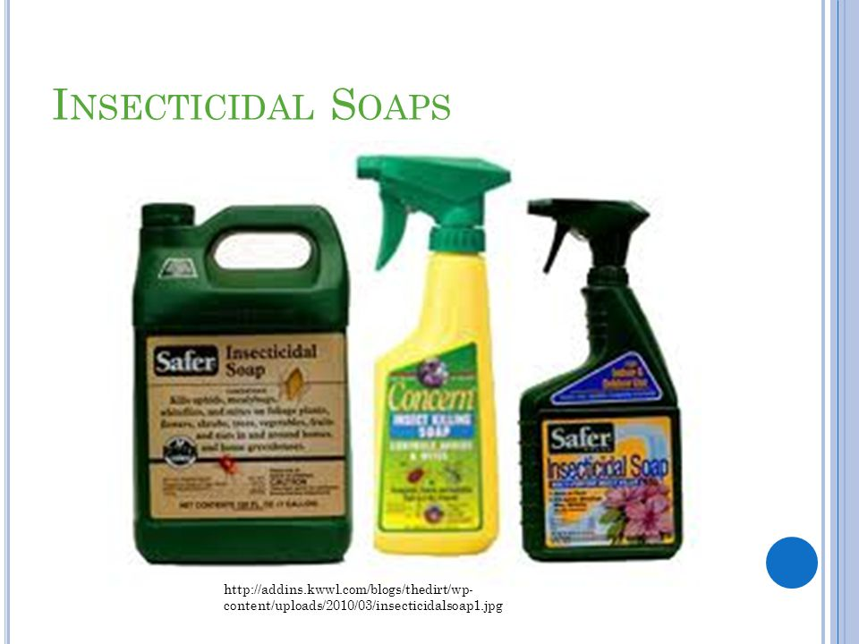 Insecticidal Soaps http://addins.kwwl.com/blogs/thedirt/wp-content/uploads/2010/03/insecticidalsoap1.jpg.