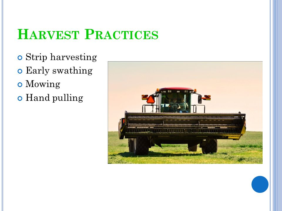 Harvest Practices Strip harvesting Early swathing Mowing Hand pulling