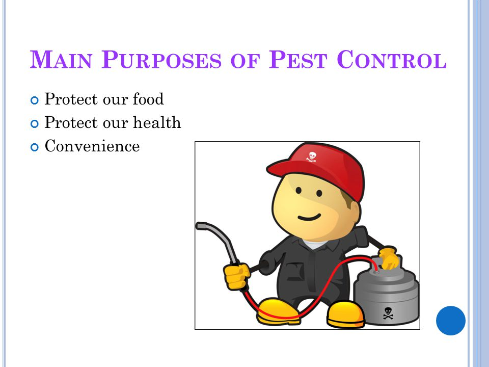 Main Purposes of Pest Control