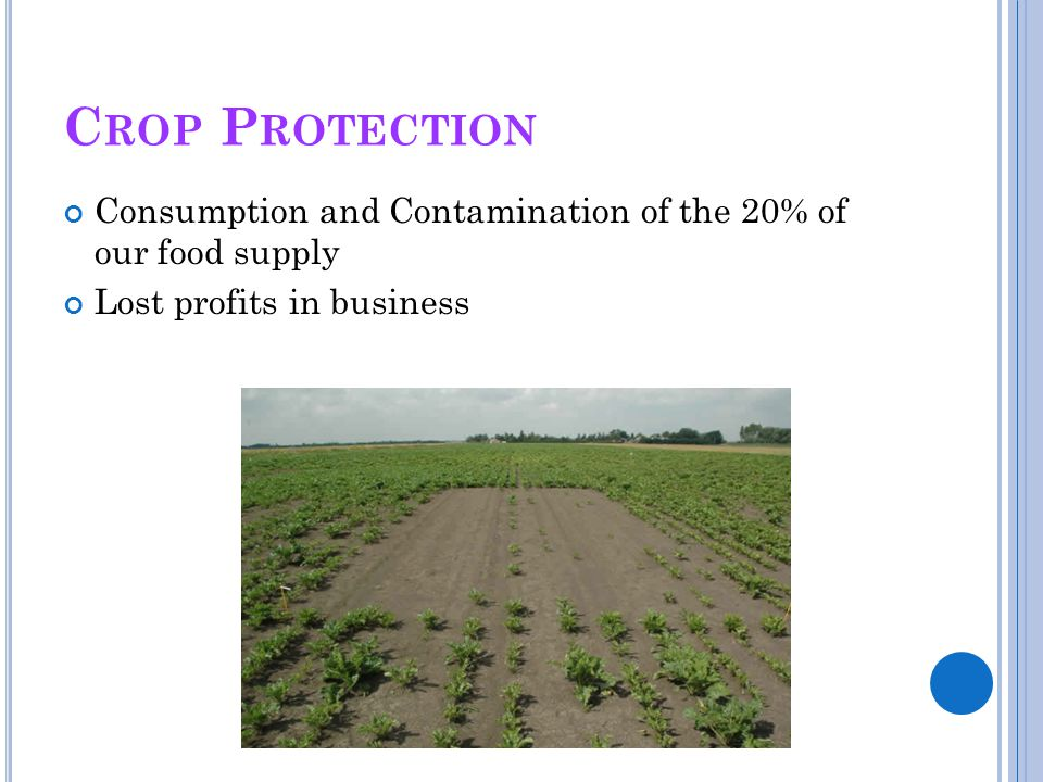 Crop Protection Consumption and Contamination of the 20% of our food supply.