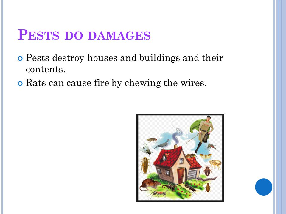 Pests do damages Pests destroy houses and buildings and their contents.