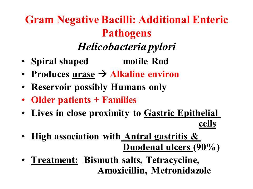 Gram Negative Bacilli: Additional Enteric Pathogens Helicobacteria pylori