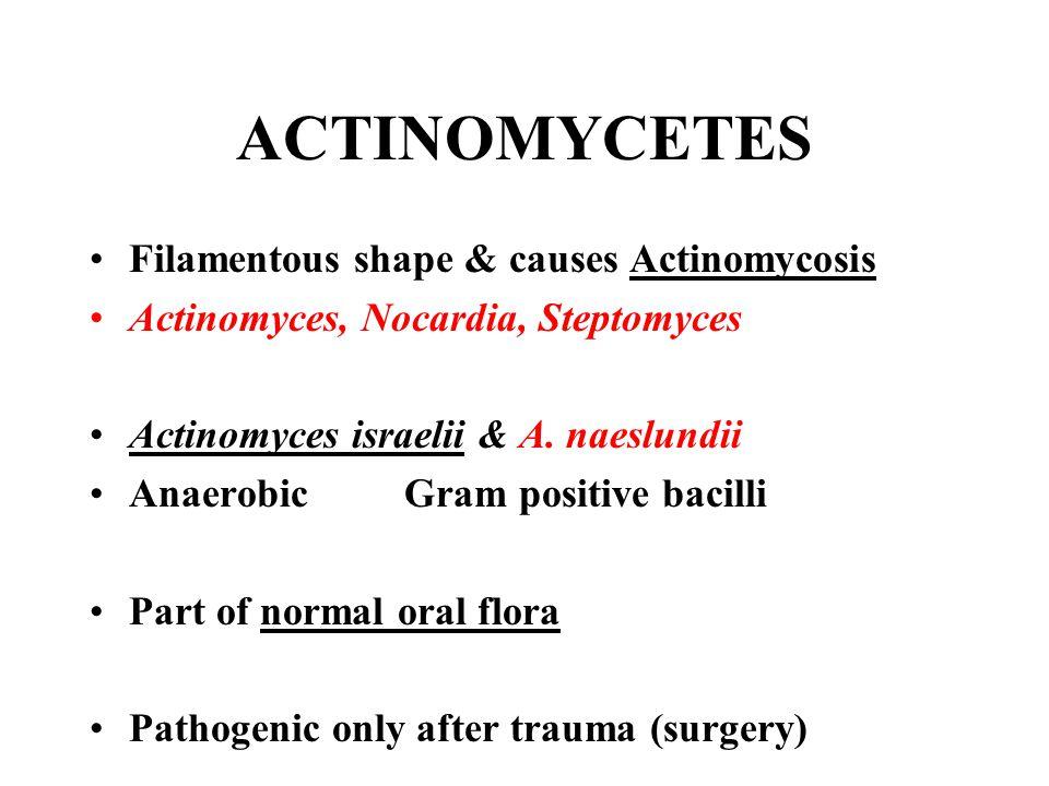 ACTINOMYCETES Filamentous shape & causes Actinomycosis