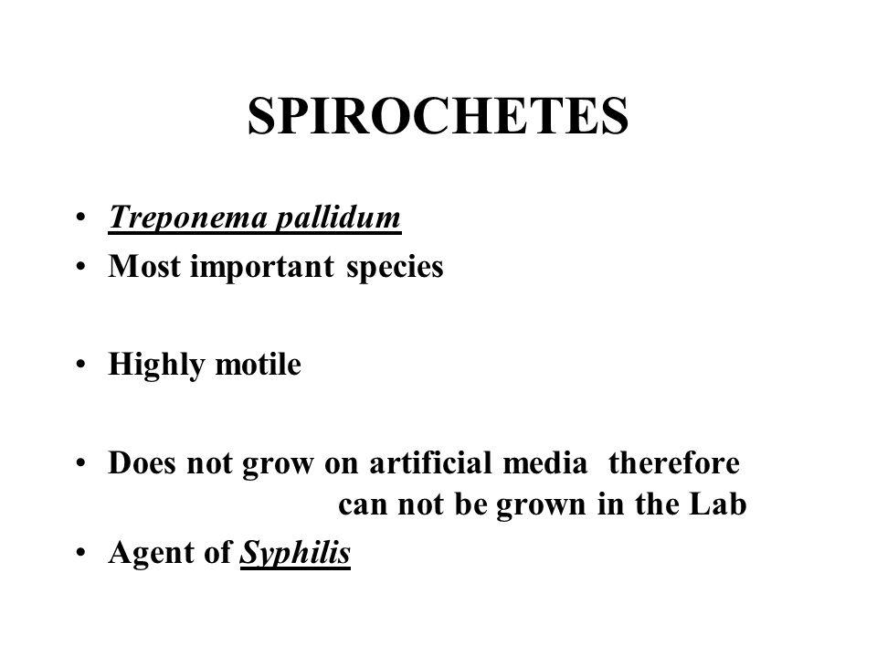 SPIROCHETES Treponema pallidum Most important species Highly motile