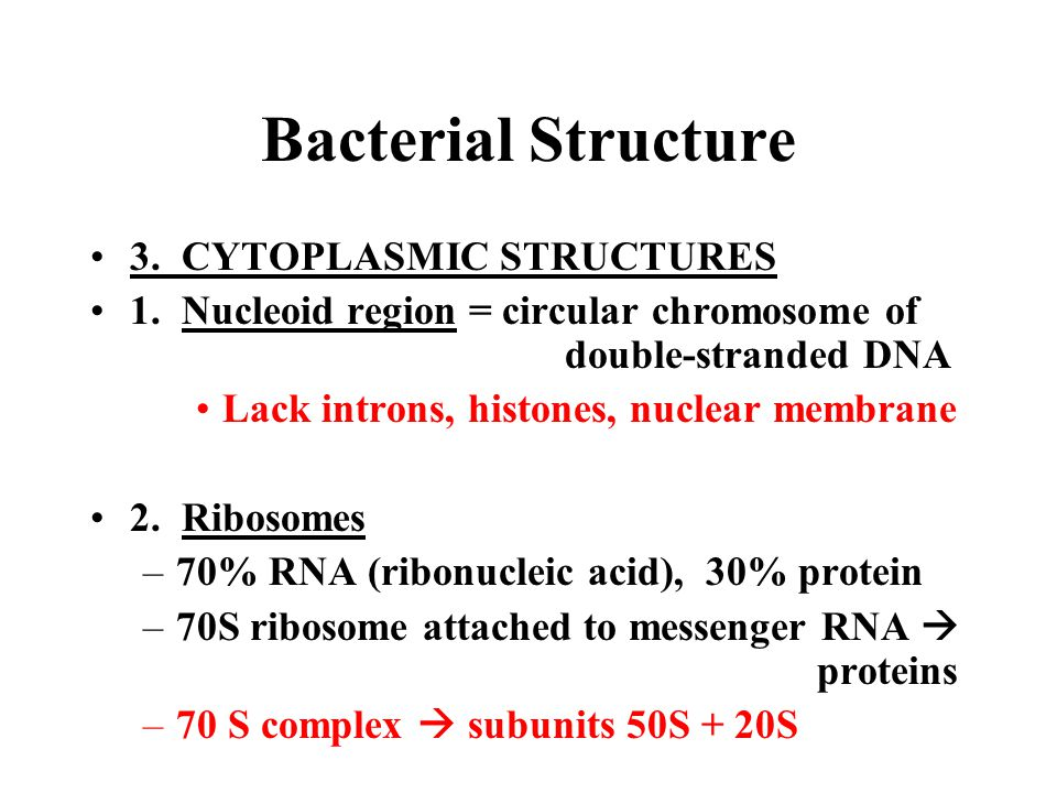 Bacterial Structure 3. CYTOPLASMIC STRUCTURES