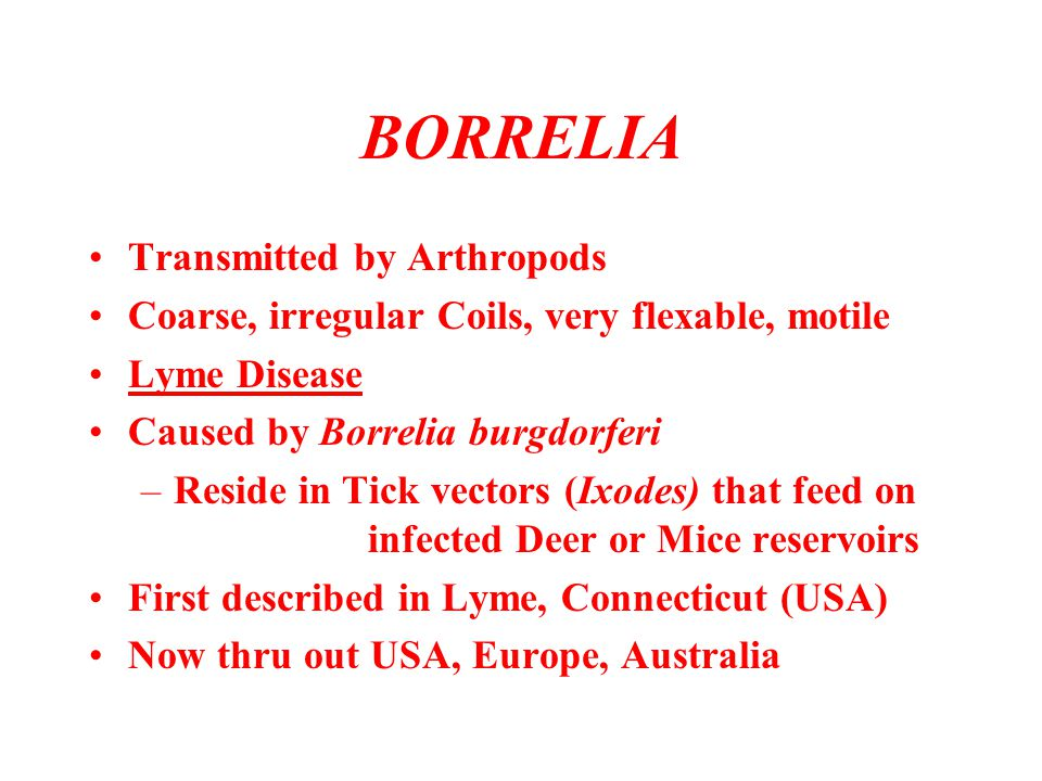 BORRELIA Transmitted by Arthropods