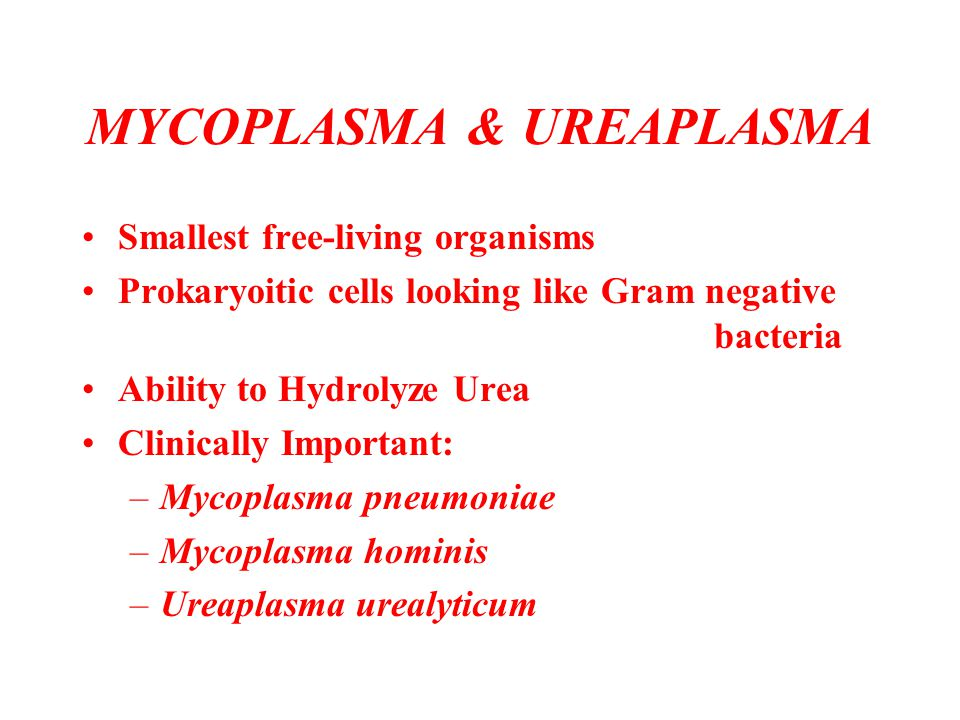 MYCOPLASMA & UREAPLASMA