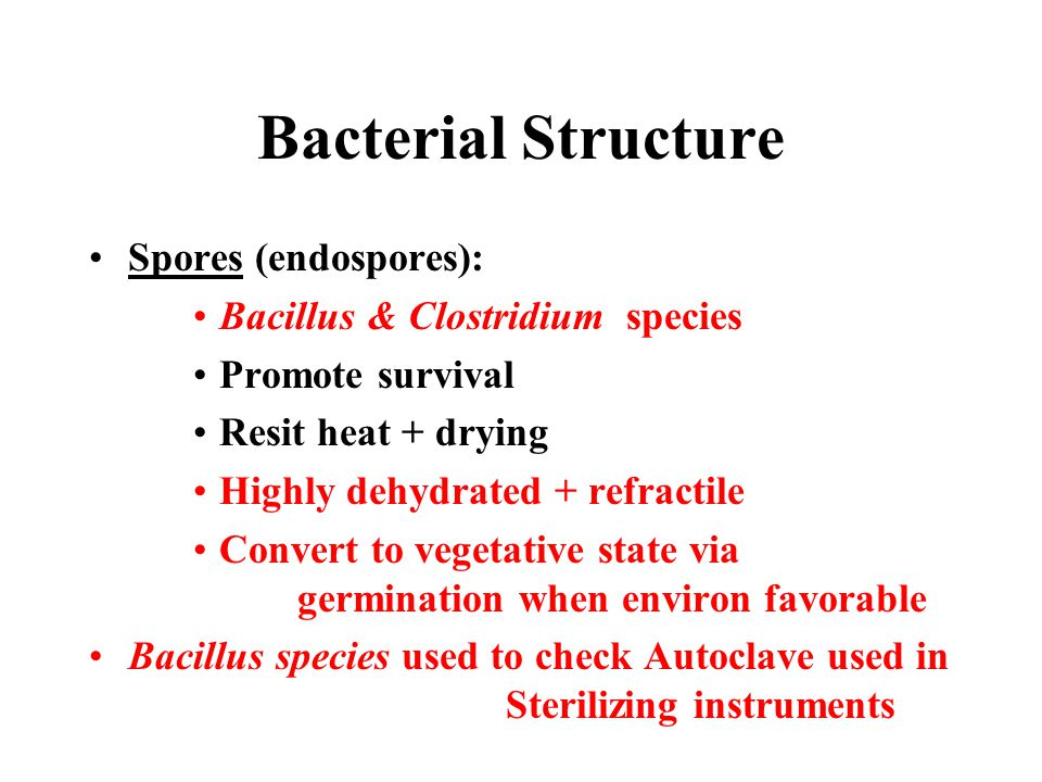 Bacterial Structure Spores (endospores):