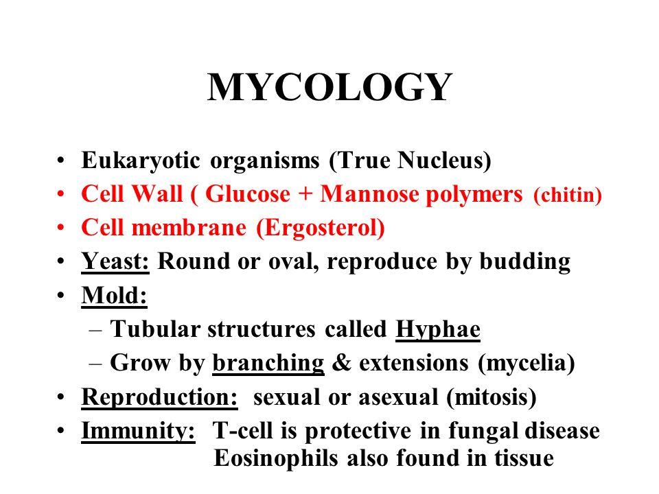 MYCOLOGY Eukaryotic organisms (True Nucleus)