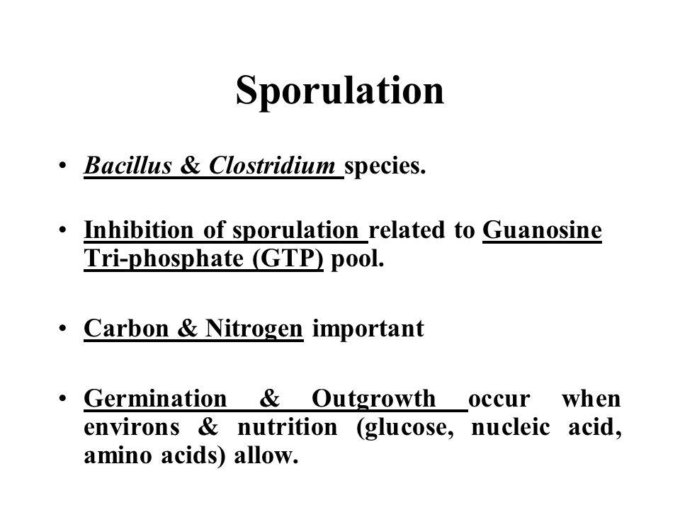 Sporulation Bacillus & Clostridium species.