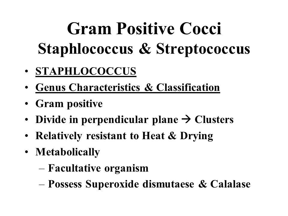 Gram Positive Cocci Staphlococcus & Streptococcus