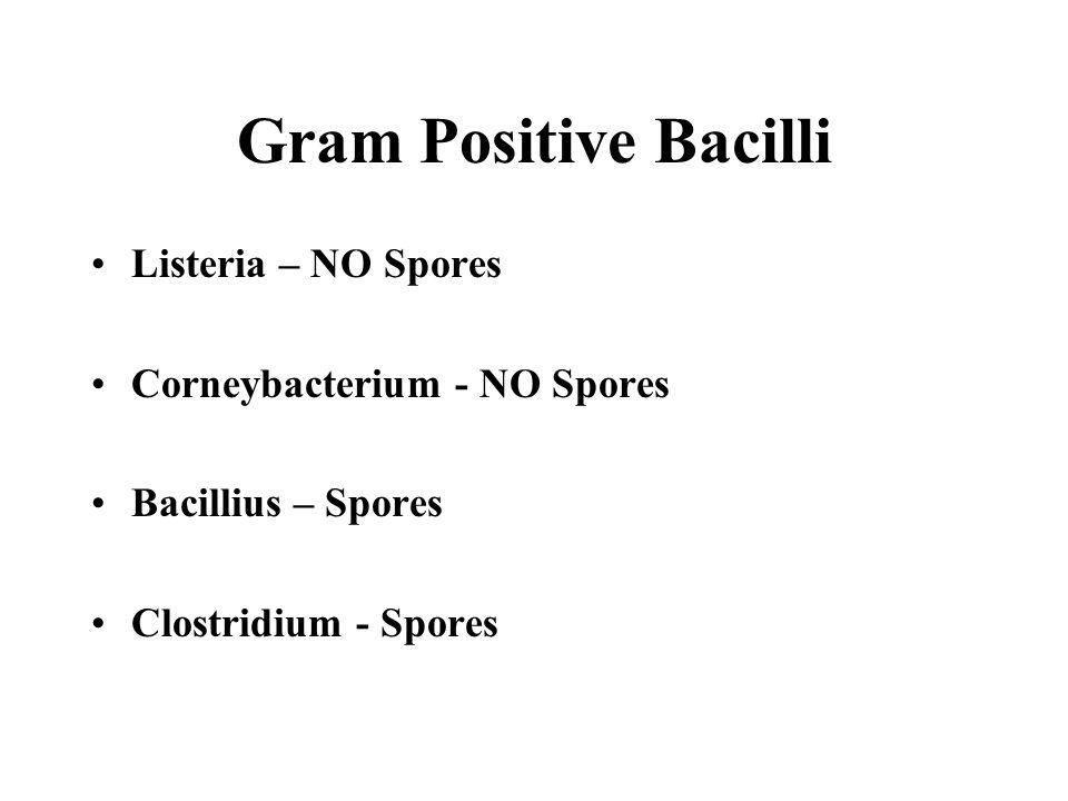 Gram Positive Bacilli Listeria – NO Spores Corneybacterium - NO Spores