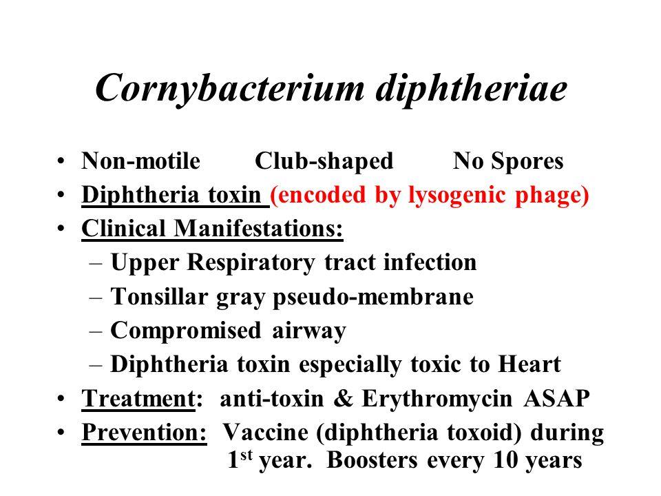Cornybacterium diphtheriae