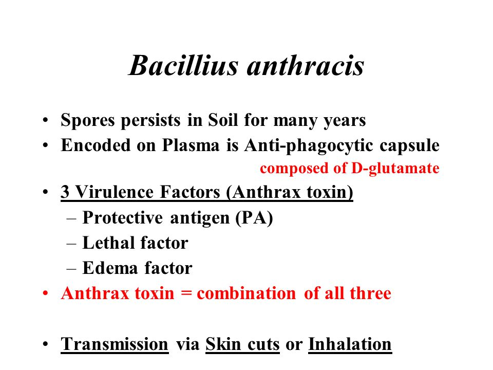 Bacillius anthracis Spores persists in Soil for many years