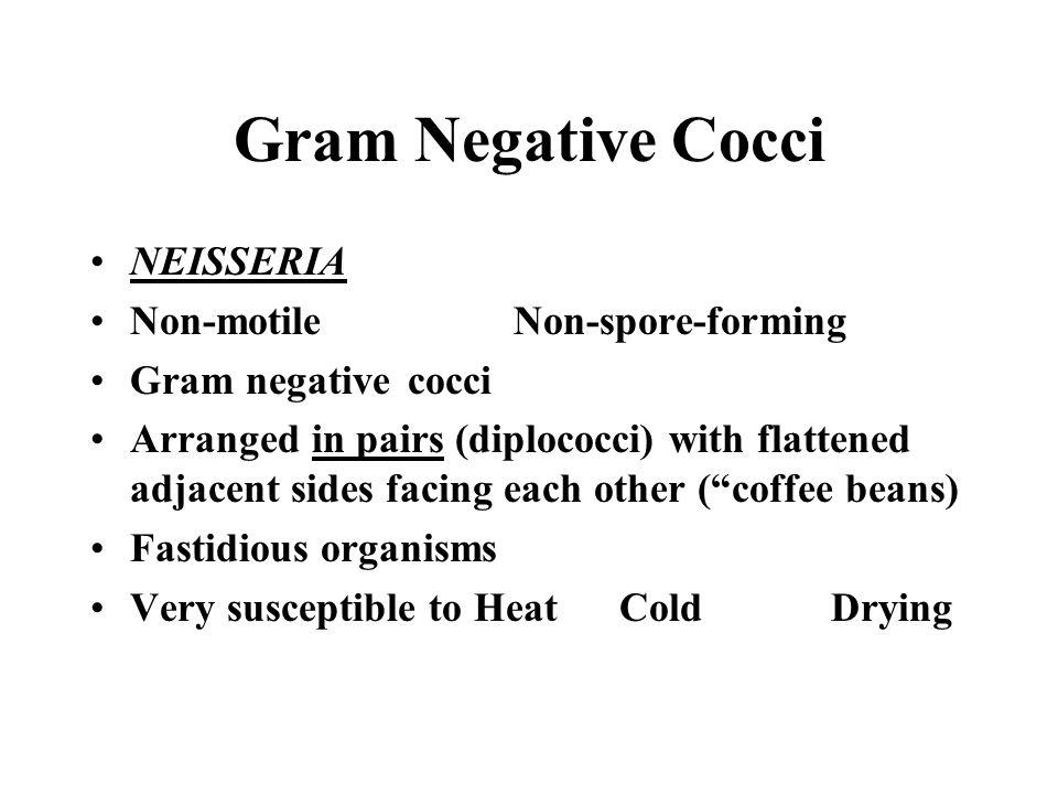 Gram Negative Cocci NEISSERIA Non-motile Non-spore-forming
