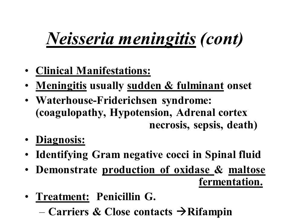 Neisseria meningitis (cont)