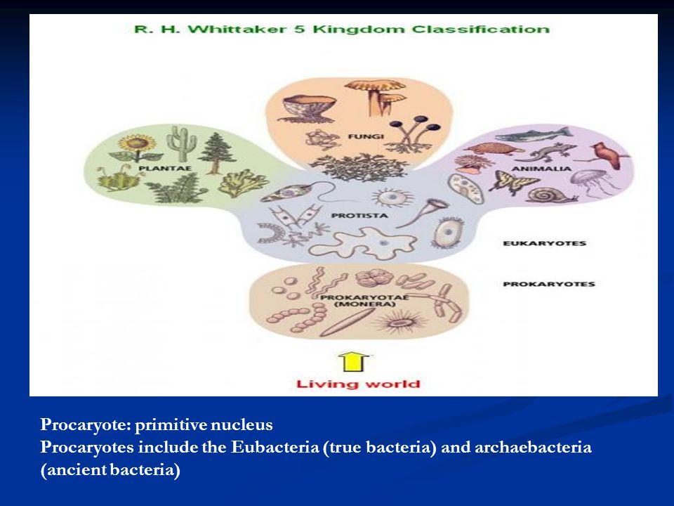 Procaryote: primitive nucleus