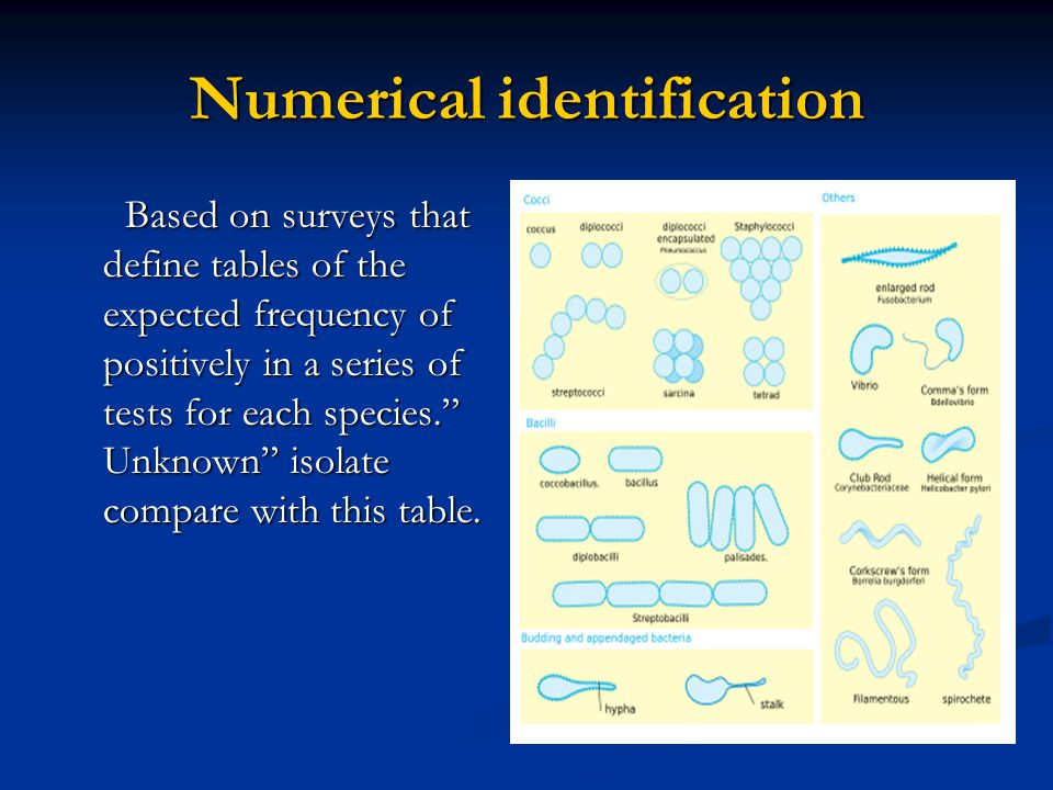Numerical identification