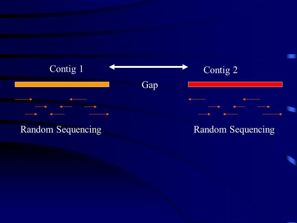 Contig 1 Contig 2 Gap Random Sequencing Random Sequencing