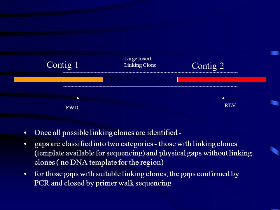 Contig 1 Contig 2 Once all possible linking clones are identified -